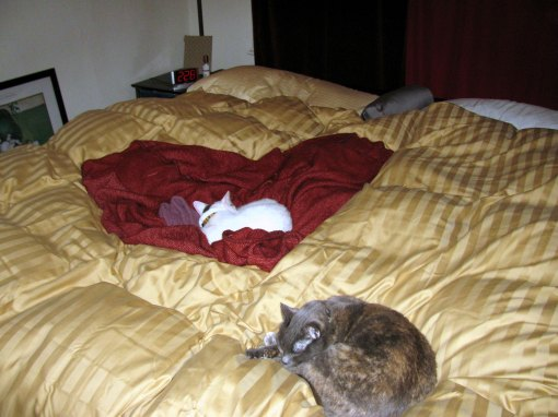 Panache Cats in bed
