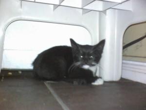 Laxmi Saito, The Panache Cats, The Panache Orchestra, Panache house, rescuing feral kittens