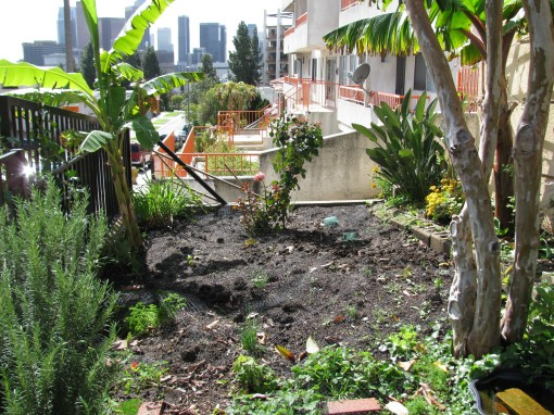 Panache house, Panache jungle, urban gardening,