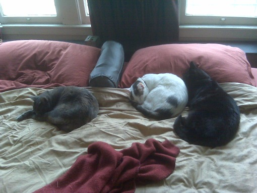 L-R: Gureyo, Pink & Jaco.  Laxmi is under the bed.