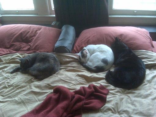 L-R: Gureyo, Pink & Jaco.  Laxmi is under the bed.