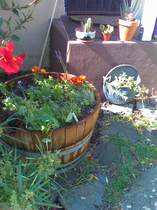 Still more herbs, marigolds and nasturtiums