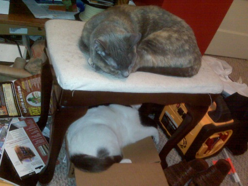 A rare visit by Gureyo (top) with Pink (in box) and Jaco (unseen behind the box) to supervise my efforts