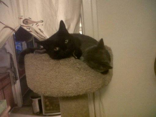 This made my day when I saw Jaco finally let Dusty share a bed with him on the kitty tower like he used to do with Pink.