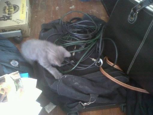 Musician cats