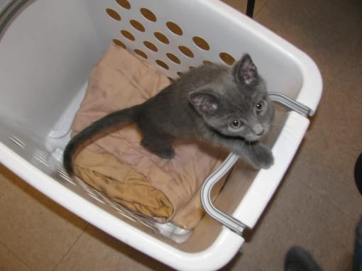 In the laundry cart
