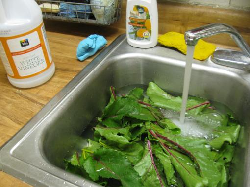 rinsing the stemmed beet greens